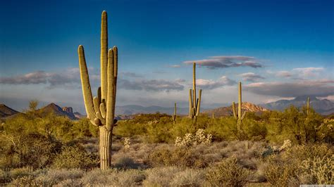 Home Plans And More Wallpaper Saguaro Cactus Collection 9 Wallpapers