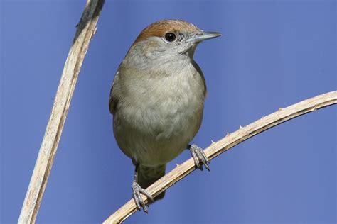 natureplus wildlife garden blog the value of bird