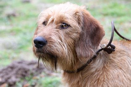 Rechnung Kleinunternehmer Wko broholmer hunderasse stadthunde hunde community 28
