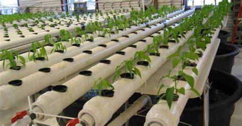 membuat hidroponik di rumah cara membuat tanaman hidroponik di rumah kebun naya
