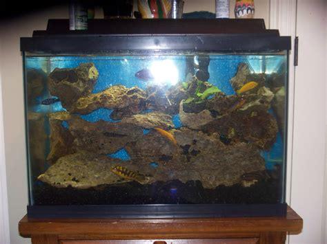 20 gallon fish tank how many fish cichlids com dorion s 20 gallon tank 2017 fish tank