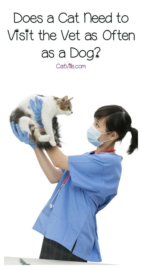 how much is a vet visit for a puppy does a cat need to visit the vet as often as a catvills