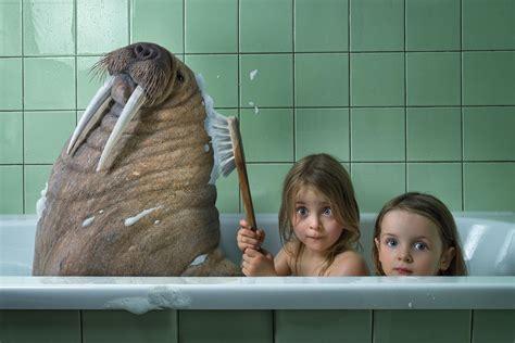 bathtub funny humor children animals walrus bath child wallpaper