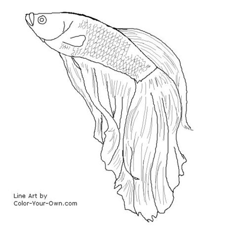 Betta Fish Coloring Pages betta fish coloring page