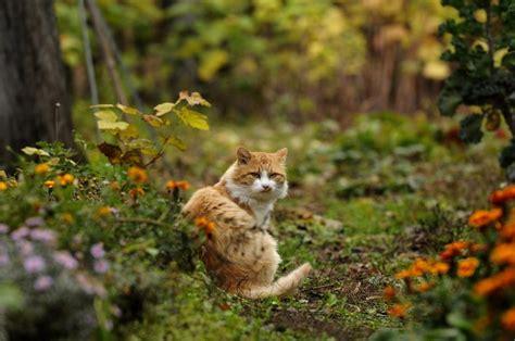 cat garden cat garden lost passenger pixdaus