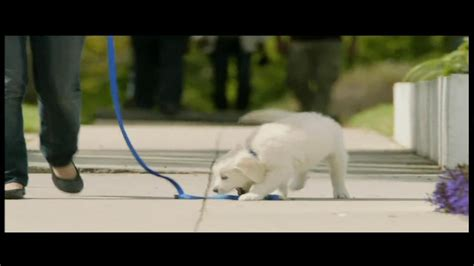 petsmart puppy starter kit petsmart puppy starter kit tv commercial puppies ispot tv