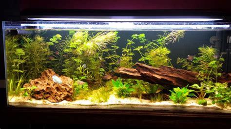 Aquascape Aquarium 120l Communautaire Par Pierrem1103