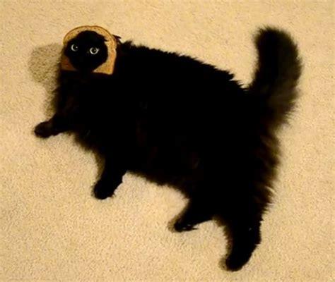 K Sq Black Cat Big Size tumblr m4i8uuk8pt1qehcb3o1 500 png 500 215 422 cats i cats pics and