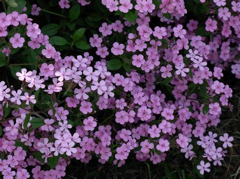 stock photo showcase 187 archives 187 small pink flowers