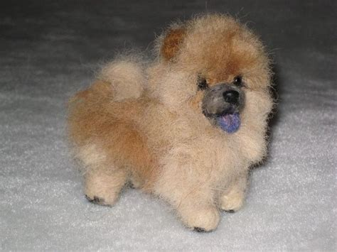 miniature chow chow pomeranian mix 25 best ideas about miniature chow chow on panda recipe for puppy