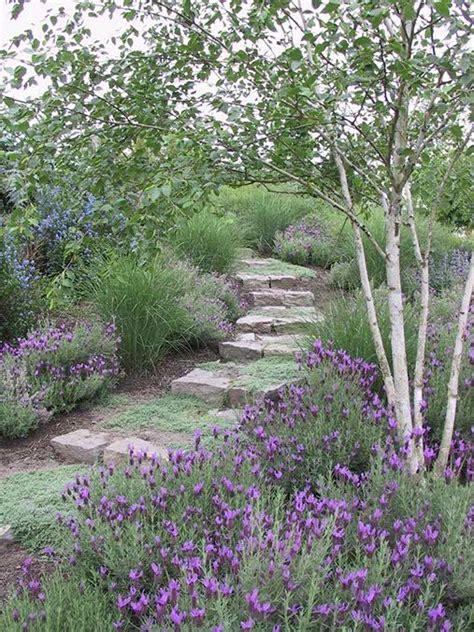lavender garden cottage lavender baby kitchen herb garden jardin d herbes