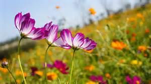 fleur d 233 t 233 au jardin liste des plus belles fleurs et