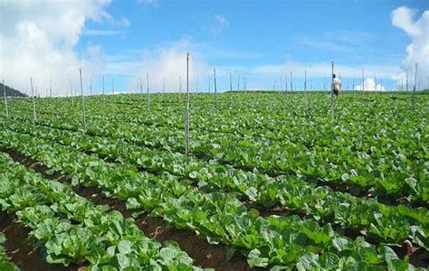 vegetable organic vegetable farm cameron highlands