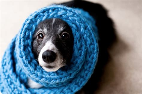 what s more awesome than dogs dogs wearing scarves 46