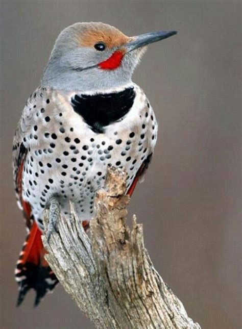 woodpecker of florida birds pinterest