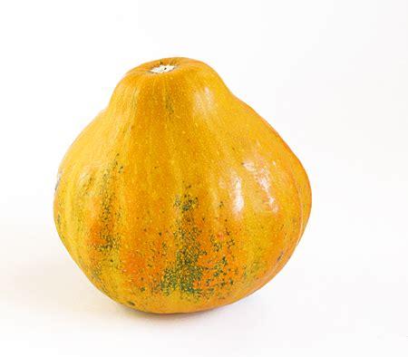 zucche mantovane specie e variet 224 mimma pallavicini s weblog