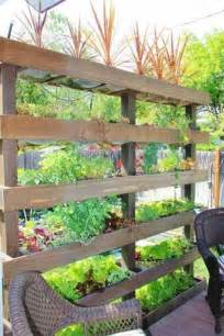 17 best ideas about privacy plants on pinterest garden