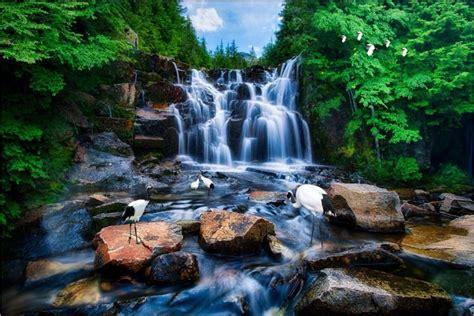 custom mural  wallpaper mountain waterfall water crane