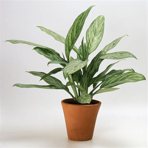 office plants that don t need sunlight indoor plants that don t need light 7 beautiful indoor plants that don t need sunlight to
