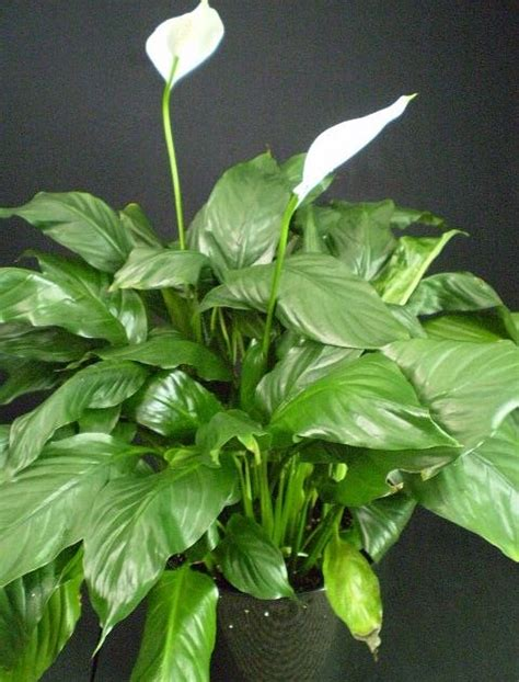 common house plants for funerals plants are the strangest funeral plants part ii