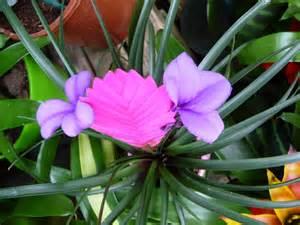 plante fleurie d int 233 rieur page 3 c 244 t 233 jardin