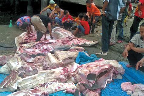 Jaring Ikan 1 1 nelayan tanjung tiram jaring hiu 1 ton