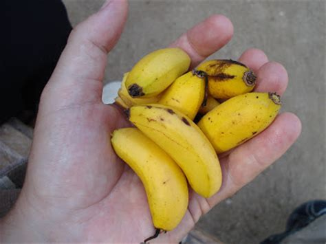 tiny banana name efference big hand small banana