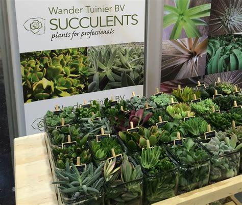 Culture Des Plantes by La Culture Des Plantes Succulentes