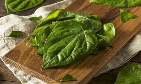 manfaat daun sirih  wajah eva mulia clinic