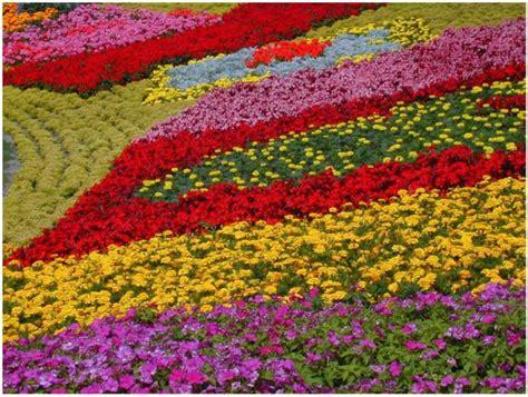 flower gardens in orlando image from http www flowerpicturegallery d 9618 2