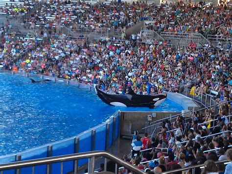 free puppies orlando fl sea world florida review family finds