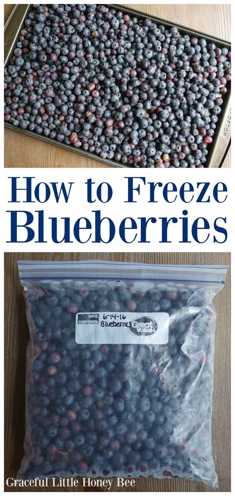 how to freeze blueberries graceful little honey bee