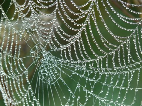 foto web free photo cobweb morgentau dew dewdrop free image