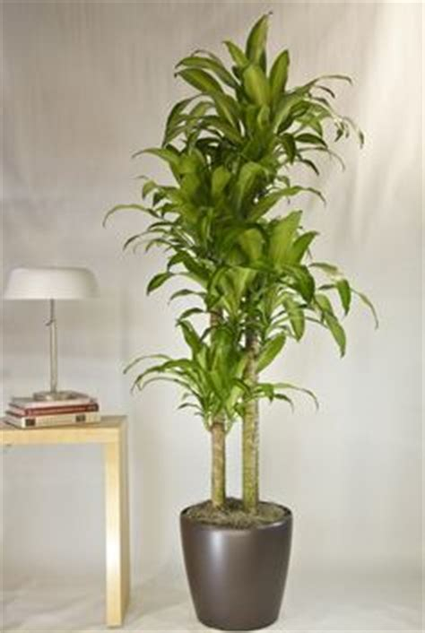 artificial sunlight l for plants lo light plants on low lights houseplant and
