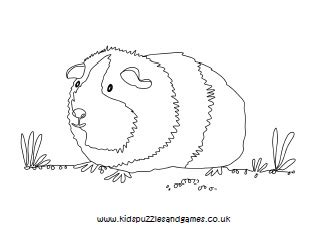 printable coloring page guinea pig guinea pig colouring kids puzzles and games