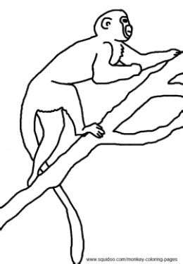 colobus monkey coloring page monkey pictures and coloring pages