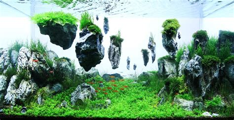 aquascape layout contest the 2nd round grading top 200 layouts the international
