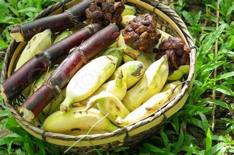 Green banana food for elephant   Stock Photo   Colourbox