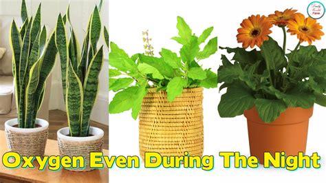 plants  give  oxygen    night youtube