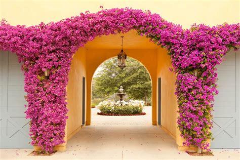 mediterranean climbing plants bougainvillea garden ideas pool mediterranean with