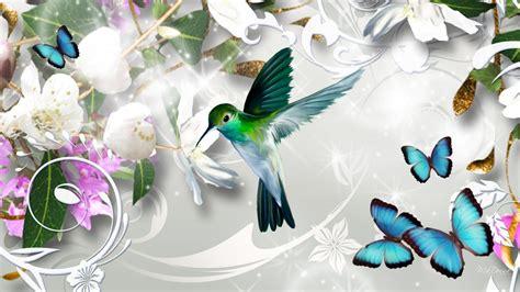 colibri fond decran hd