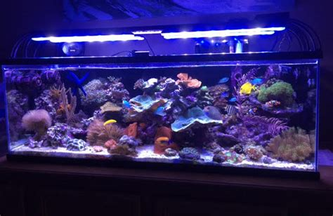 is lighting the reef tank with fluorescent lighting aquarium lighting information guide reef planted par