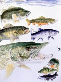 Freshwater Fish Freshwater Fishes Nys Dept Of Environmental Conservation