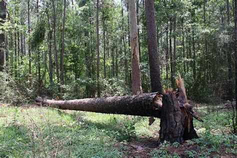 if a tree falls in the forest on the border between the deaf and hearing worlds books if a tree falls in the forest flickr photo