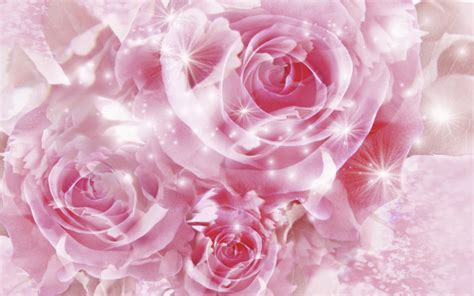 wallpaper flower pink rose roses images pretty pink roses hd wallpaper and background