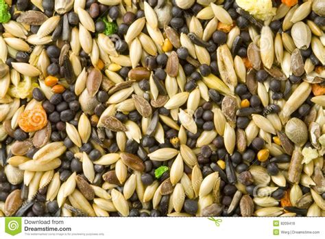 bird food royalty free stock image image 8209416