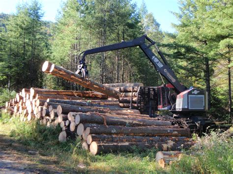 harvesting plantations in tarkeeth state harvesting historic white pine the adirondack almanack