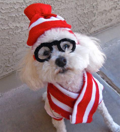 minute diy halloween costumes   dog broke