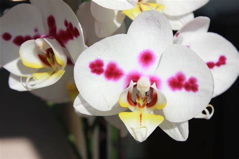 An Ode For Orchids ode to the orchid the surprisingly resilient plant