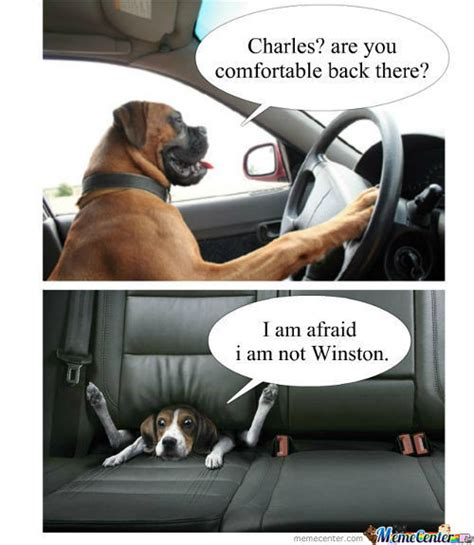 Dog Driving Meme - dog driving memes best collection of funny dog driving